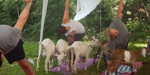Goat Yoga @ Pine meadow alpaca farm
