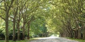 Certified Arborist Training Workshop