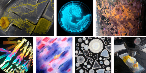 Zoom In-Explore-Reveal: Microbiology and Microscopy Summer school