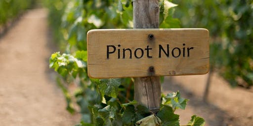 Know More Pinot Noir