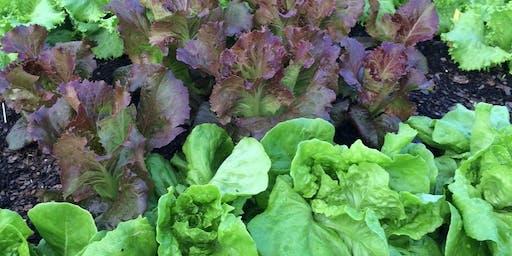 Garden Workshop: Fall Vegetable Gardening (Thursday - August 22, 2019)