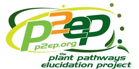 2019 P2EP Summer Research Symposium tickets