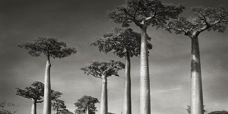 TALK: In Conversation with Photographer Beth Moon tickets