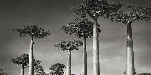 TALK: In Conversation with Photographer Beth Moon