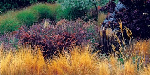 Ornamental Grasses for the Modern Garden