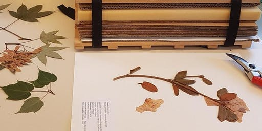 Herbarium Workshop: Create Your Own Plant Specimen