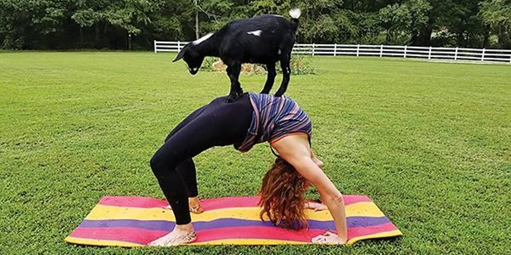 Goat Yoga at Sandy Ridge Farms