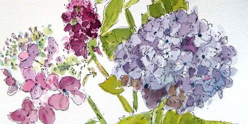 Botanical Sketching in Ink & Watercolor: Hydrangeas