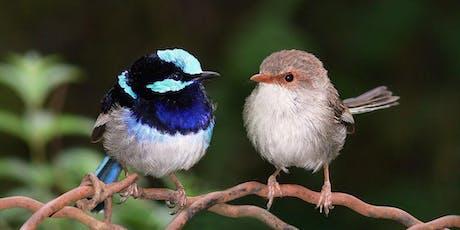 Our Backyard Birds tickets