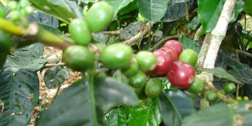 Comparative Coffee Tasting