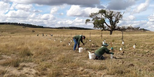 Greening Australia: National Tree Day Planting, Sunday 28th July 2019