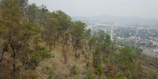 Reforestación Cerro de Moctezuma 22/Jun/19