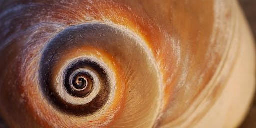 The Esoteric Psychology Course: Paradigms & Spiral Dynamics