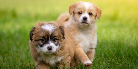 Puppy School Essentials Seminar tickets