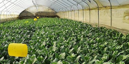 MacPherson: Farm Excursion 菜园游览 - Aug 29 (Thur)