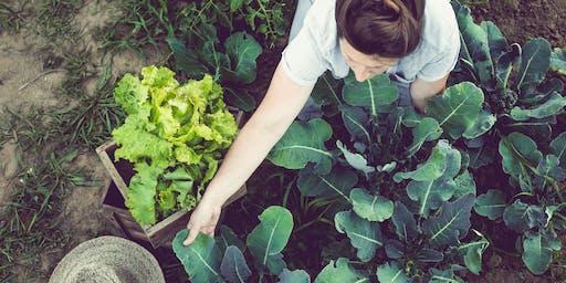 Planning a Fall Vegetable Garden