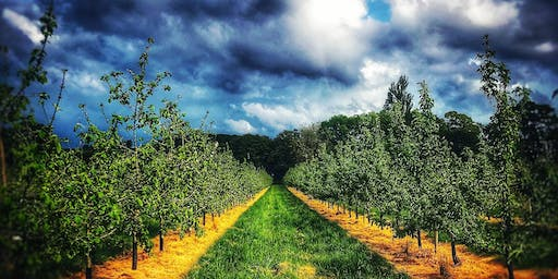 Sheppy's Summer Evening Cider Tours