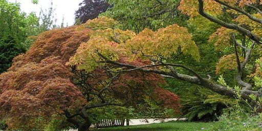 Champion and rare trees in Royal Victoria Park and Botanical Gardens