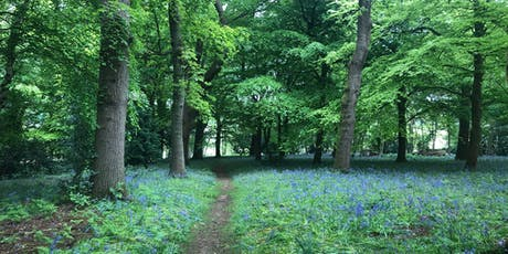 Wild Foraging session at Farnham Woodlands tickets