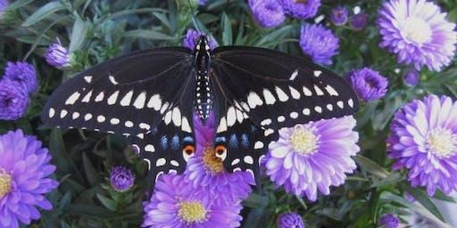 Kid's Class: Bugs & Butterflies