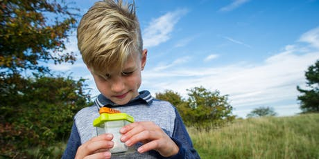Wild in the Woods (Cambourne): Wild Bug Hunting tickets