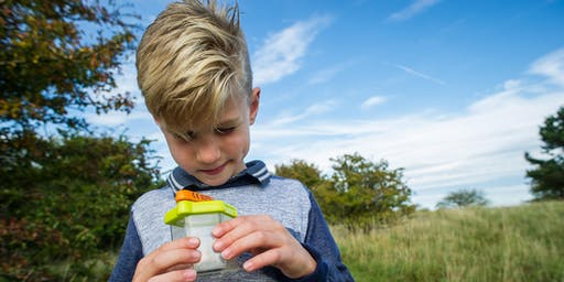 Wild in the Woods (Cambourne): Wild Bug Hunting