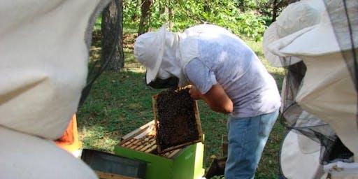 Découvrez le rucher inter-entreprises du PIPA et participez aux ateliers !