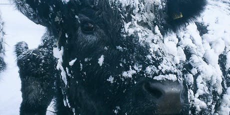 Winter is coming.... What are your cattle going to eat? tickets