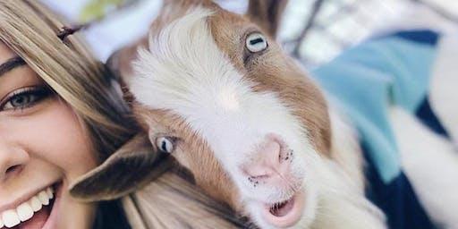 Goat Yoga Benefiting RHS Varsity Cheer!