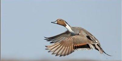 Ponass Lake IBA Birding Trip