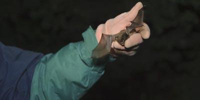 Bat Walk at London Wildlife Festival
