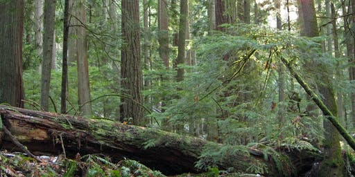 Puget Sound Forest Owners Field Day - 2019