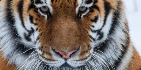Tiger Encounters September - December 2019 tickets