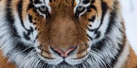 Tiger Encounters September - December 2019 tickets