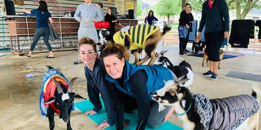 Goat Yoga in Watauga, TX!