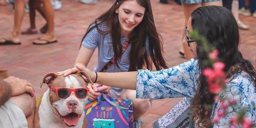 Dog Adoption on Broadway Island