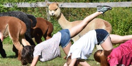 Yoga With Alpacas - August 11 @ 9am tickets