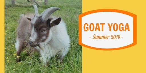 Goat Yoga 2019
