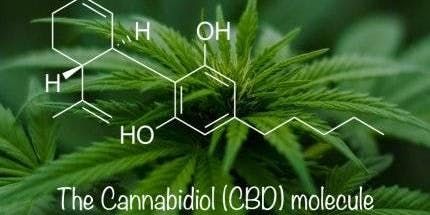 To CBD or NOT to CBD...that is the question!!