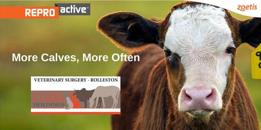 ReproActive Springsure - More Calves, More Often
