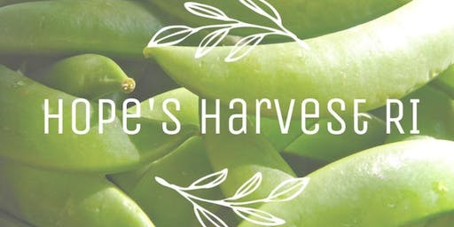 Snap Pea Gleaning Trip with Hope's Harvest! 6/25/19