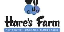 Hare's Farm Bulk Organic Blueberry Sale - 2019