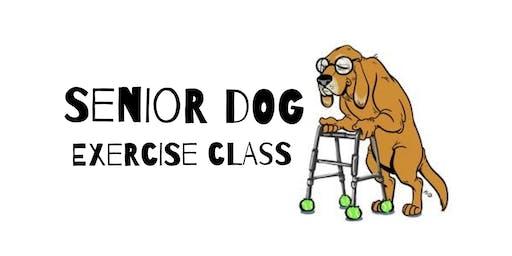 Stiff to Supple: Senior Dog Exercise Class!
