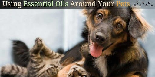 Toxic Free Living for Dogs and their Human friends