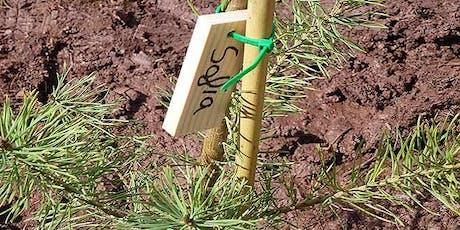 Taller Gratuito de Identificación de Arboles y arbustos entradas