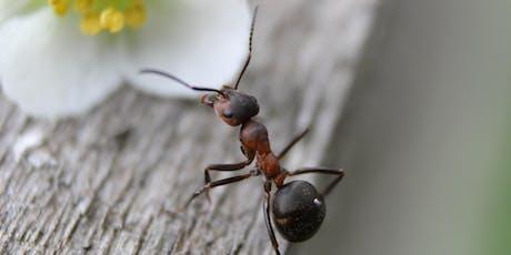 Talks sur l'environnement : Les fourmis entrepreneuses billets