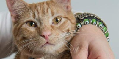 Cancelled - Feline Rescue Cat Claw Clipping Clinics-Edina York