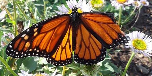 Euphoric Sunday Morning Butterfly Kisses Vinyasa Flow!