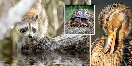 Michigan Wildlife Photography with Jamie MacDonald tickets