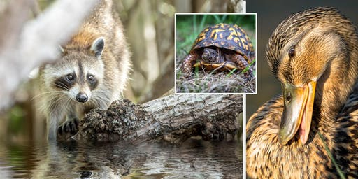 Michigan Wildlife Photography with Jamie MacDonald